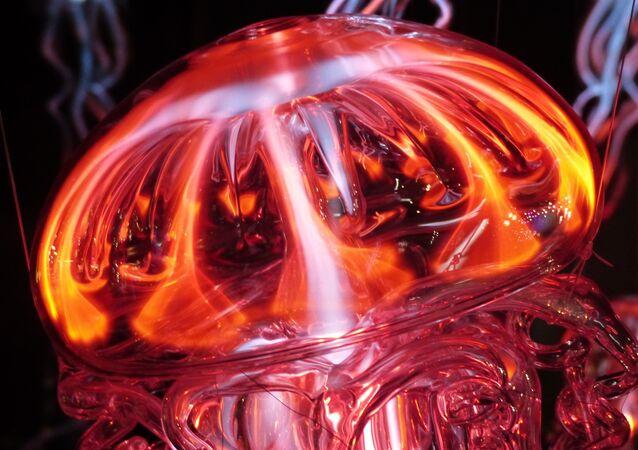 Una medusa, imagen ilustrativa