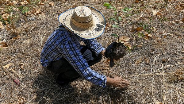 Agricultor colombiano - Sputnik Mundo