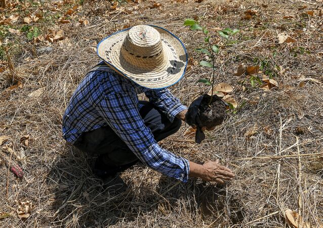 Agricultor colombiano (imagen referencial)