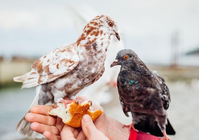 Una persona da de comer a las palomas