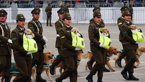 El desfile militar anual de Chile - Sputnik Mundo