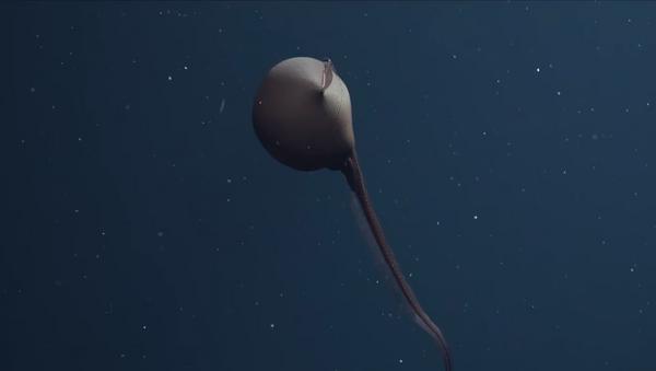 Un pez pelícano (eurypharynx pelecanoides) - Sputnik Mundo