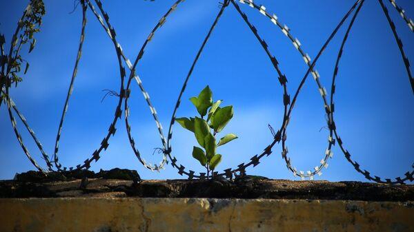 Cárcel (imagen referencial) - Sputnik Mundo