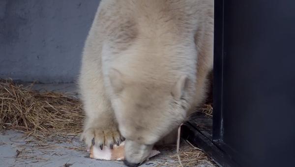 Un 'Winnie Pooh' blanco llega a su nueva casa en Krasnoyarsk - Sputnik Mundo