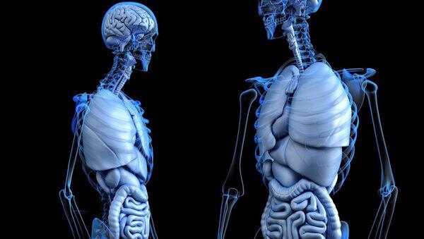 Medicina (anatomía) (imagen referencial) - Sputnik Mundo