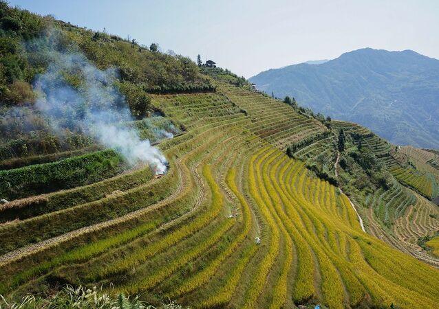 Un campo de arroz en China