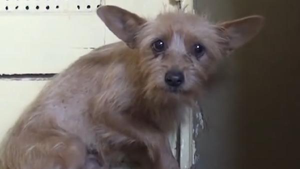 Conoce la conmovedora historia de salvación de la perra Holly - Sputnik Mundo