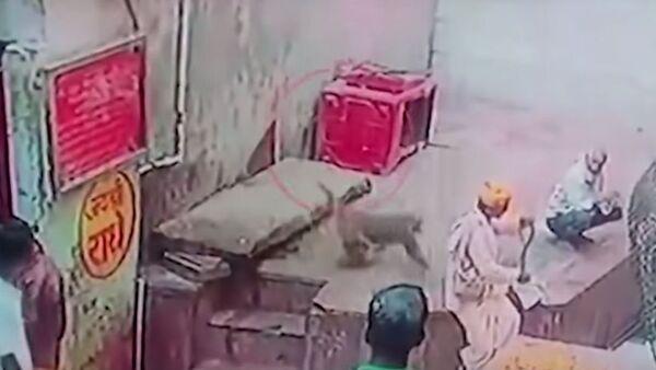 Un macaco le roba la cobra al encantador de serpientes - Sputnik Mundo