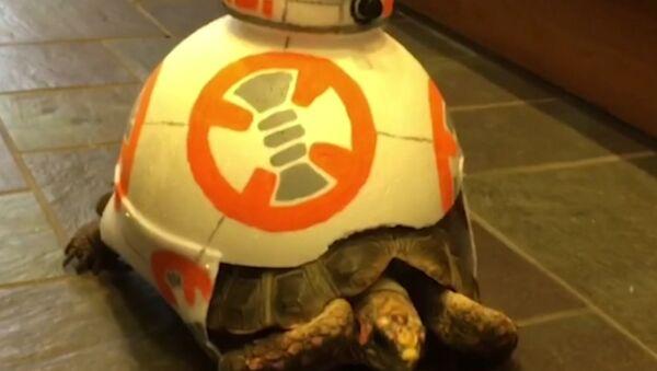 Esta tortuga se une a 'la guerra de las galaxias' - Sputnik Mundo