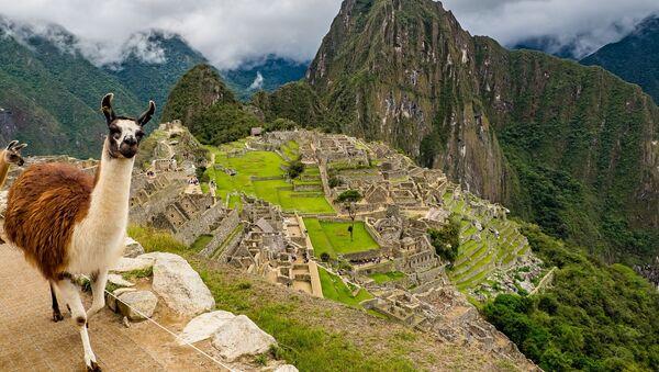 Una llama en Machu Picchu - Sputnik Mundo