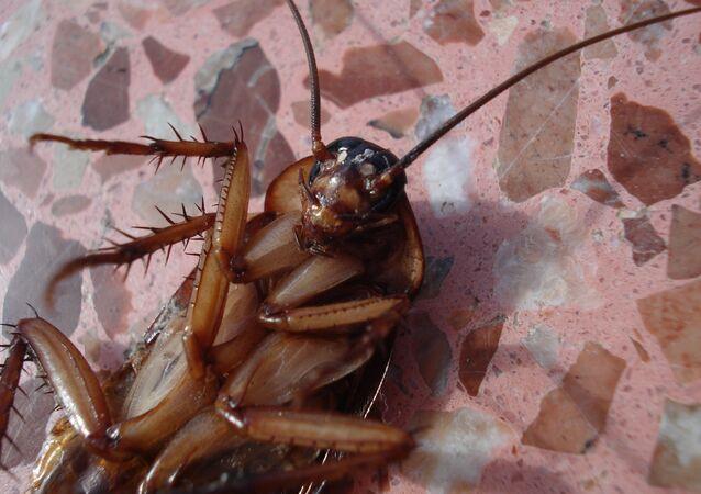 Cucaracha (imagen referencial)