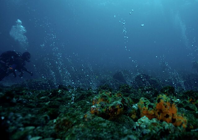 Imagen registrada en las Islas Galápagos, parte de la exposición 'The Origins of Color' del artista Paul Rosero Contreras