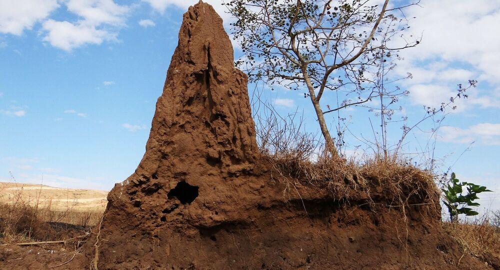 Un termitero (imagen referencial)