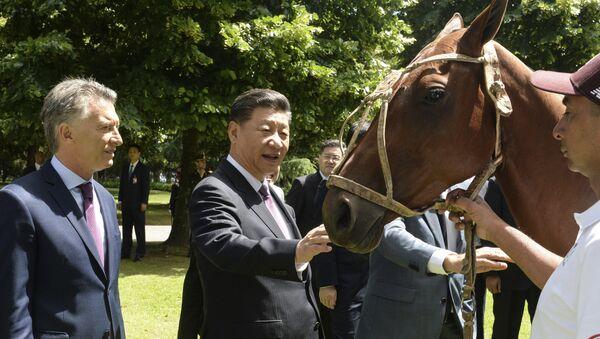 Mauricio Macri, presidente de Argentina, le regala un caballo de polo a su homólogo chino, Xi Jinping - Sputnik Mundo