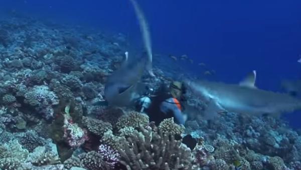 No apto para miedosos: seis tiburones rodean a varios buceadores y uno pasa al ataque (vídeo) - Sputnik Mundo