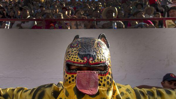 Tigre de San Antonio se prepara para luchar en el porrazo - Sputnik Mundo