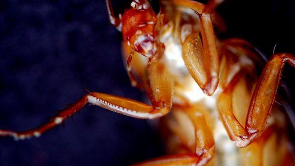 Una cucaracha - Sputnik Mundo