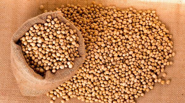 Las semillas de soja - Sputnik Mundo