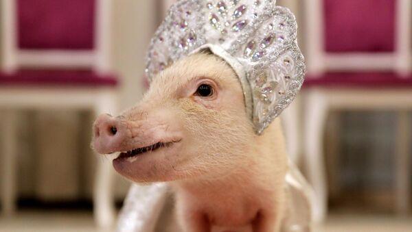 2019, el año del cerdo de tierra en el horóscopo chino - Sputnik Mundo