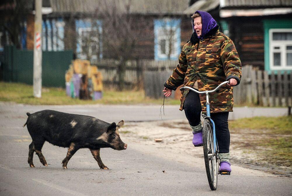 2019, el año del cerdo de tierra en el horóscopo chino