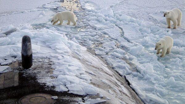 Osos polares acercándose al submarino nuclear USS Honolulu (2003) - Sputnik Mundo