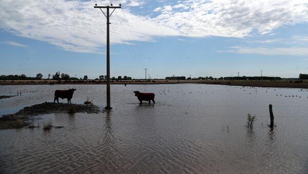 Un campo inundado en la provincia de Buenos Aires - Sputnik Mundo