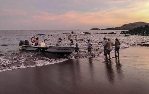 Desembarque de las iguanas Conolophus subcristatus en la Isla Santiago, en Islas Galápagos - Sputnik Mundo