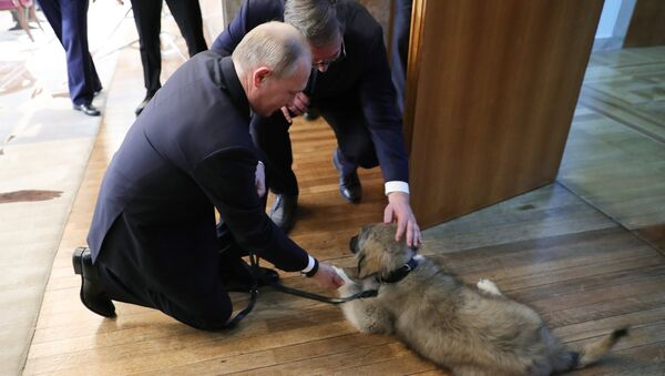 El presidente de Rusia, Vladímir Putin, y el presidente serbio, Aleksandar Vucic - Sputnik Mundo