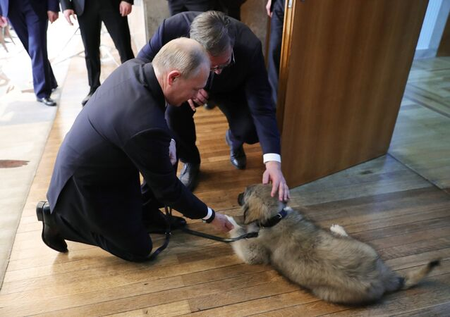 El presidente de Rusia, Vladímir Putin, y el presidente serbio, Aleksandar Vucic