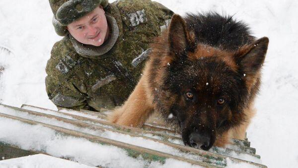 Entrenamineto de los perros militares (archivo) - Sputnik Mundo