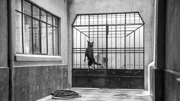 El Borras, el perro de la película Roma de Alfonso Cuarón - Sputnik Mundo
