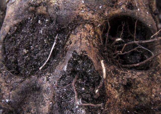 Cráneo localizado en una fosa (imagen referencial)