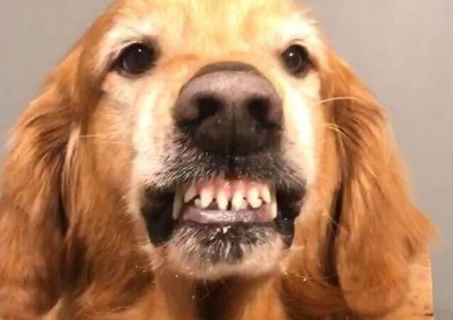 Sonrisa viral: este perro mexicano sí sabe posar ante la cámara