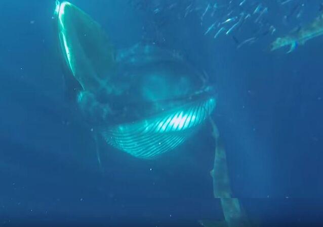 Tiburones, pingüinos, delfines y una ballena comen en 'la misma mesa'