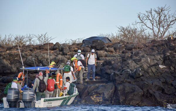 Desembarque de personal y cebos a emplear para la erradicación de roedores en la isla Seymour Norte - Sputnik Mundo