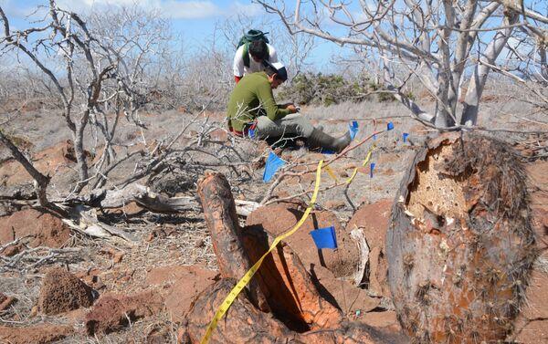 Señalización para la colocación del cebo para la erradicación de roedores en la isla Seymour Norte - Sputnik Mundo