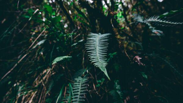 Bosque de Amazonía (imagen referencial) - Sputnik Mundo