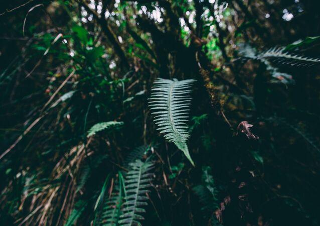 Bosque (imagen referencial)
