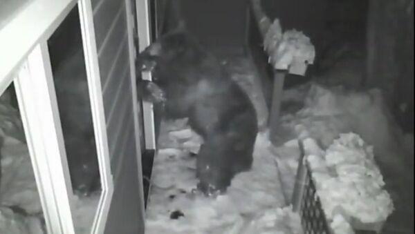 Ladrones de guante blanco: varios osos se cuelan en una caseta - Sputnik Mundo