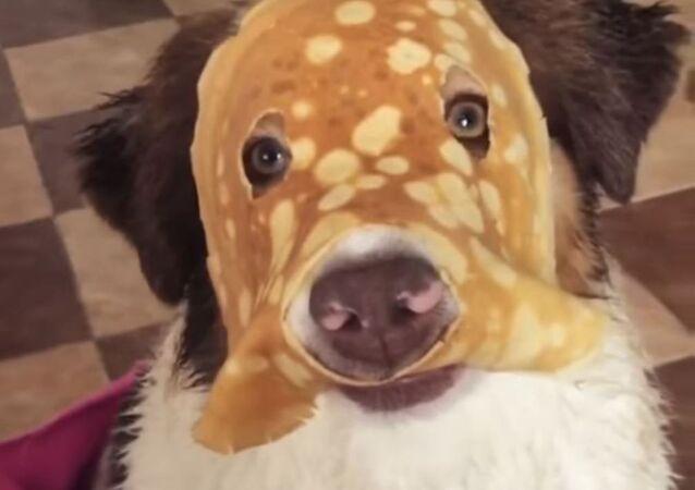 'Crepe-perro', el nuevo héroe de Marvel
