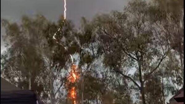Un relámpago impacta contra un árbol - Sputnik Mundo