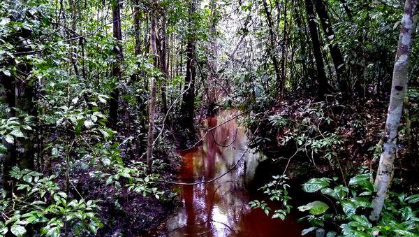 Una escena de la selva del Amazonas - Sputnik Mundo