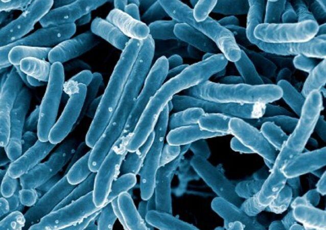 Mycobacterium tuberculosis, bacteria responsable de la mayor cantidad de casos de tuberculosis en el mundo