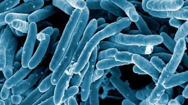 Mycobacterium tuberculosis - Sputnik Mundo
