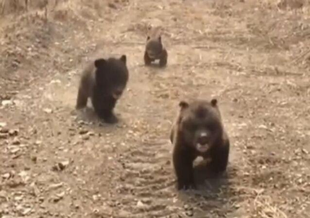 Tres oseznos huérfanos salen a pasear por primera vez
