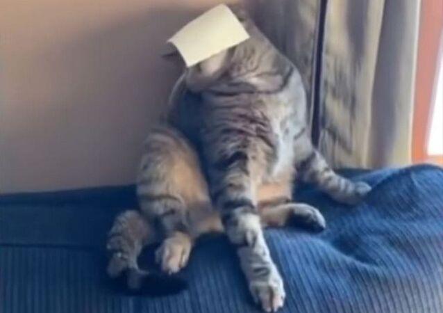 Un trozo de queso deja 'noqueado' a un gato
