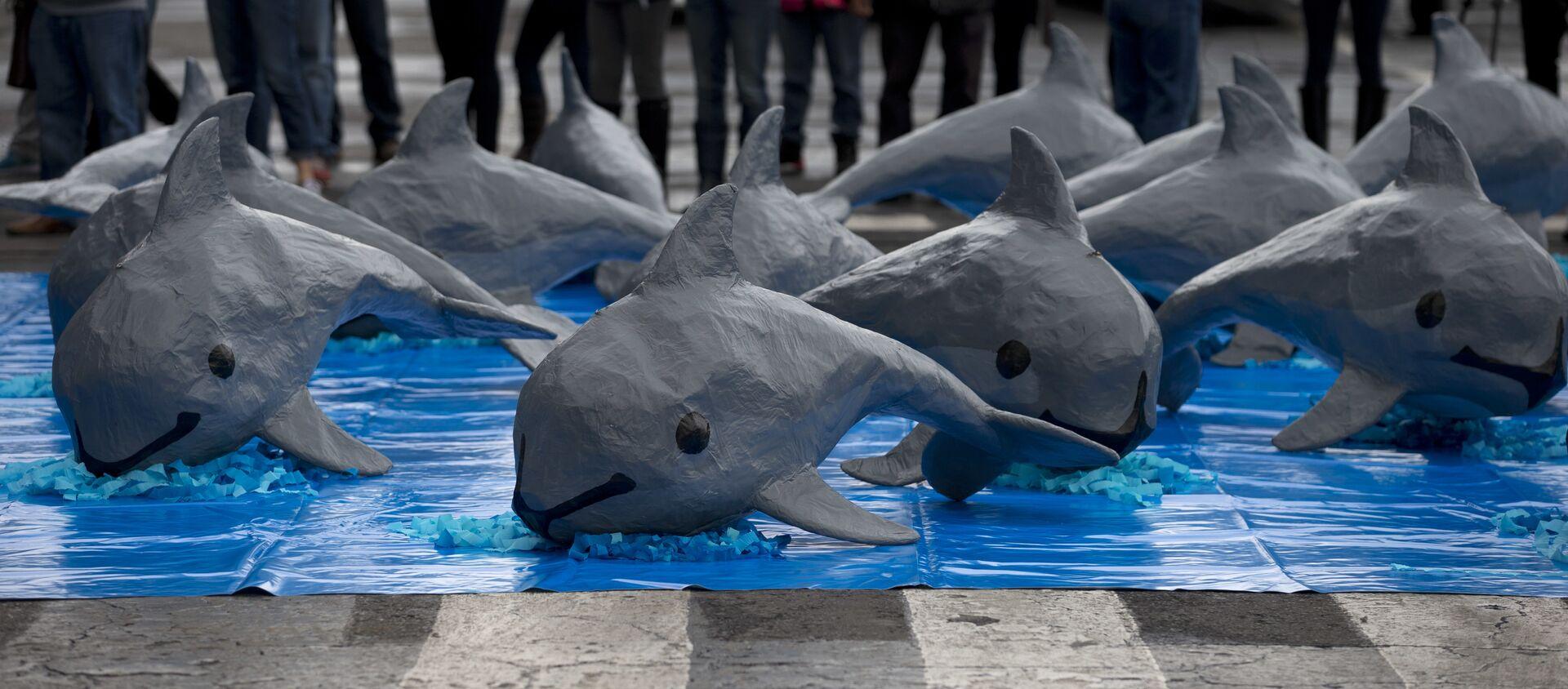 Una intervención de WWF por la vaquita marina - Sputnik Mundo, 1920, 29.03.2019