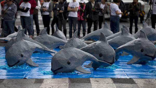 Una intervención de WWF por la vaquita marina - Sputnik Mundo