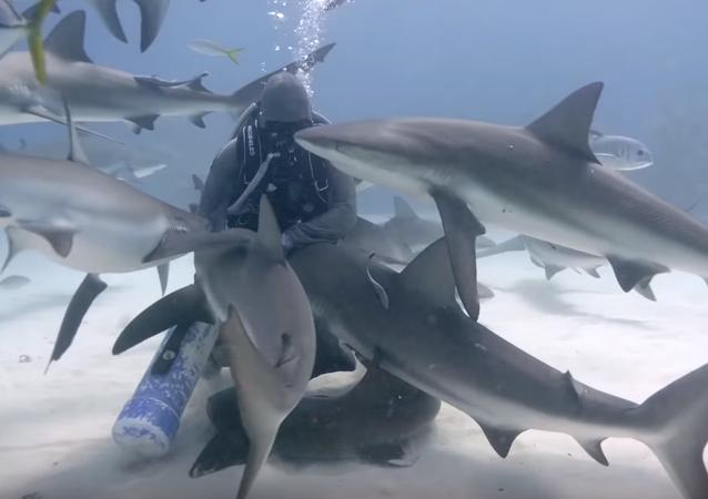Esta mujer abraza a tiburones en el fondo del mar