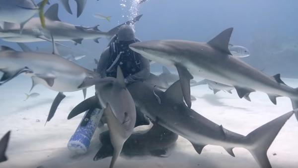 Esta mujer abraza a tiburones en el fondo del mar - Sputnik Mundo